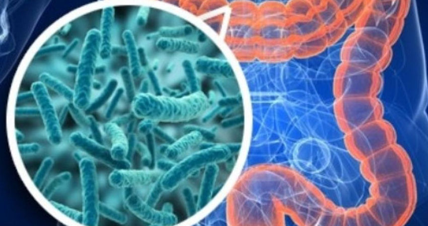 Lycotec CEO to attend First Symposium on Microbiota & Food 2018